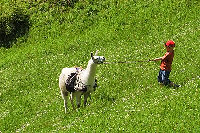 Alpaca Trekking - p1354m2288121 by Kaiser