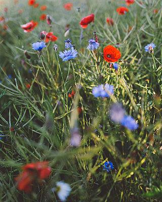 Flowers - p1507m2022515 by Emma Grann
