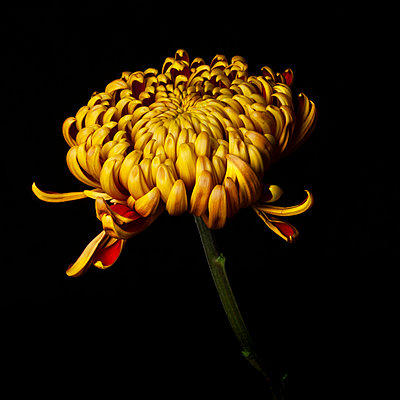 Yellow red flower - p1088m2116293 by Martin Benner