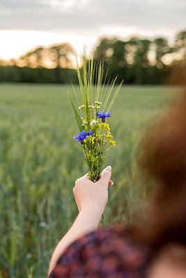 Ein Strauß Wildblumen - p1396m1452319 von Hartmann + Beese