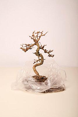Dead bonsai II - p165m853620 by Andrea Schoenrock