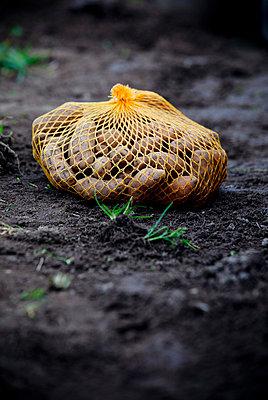 Potatoes - p228m716074 by photocake.de
