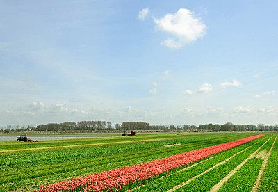 Flower crops in rural landscape - p42919046f by Mischa Keijser
