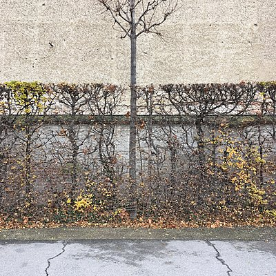Autumn hedge, Belvedere gardens, Vienna - p1401m2229888 by Jens Goldbeck