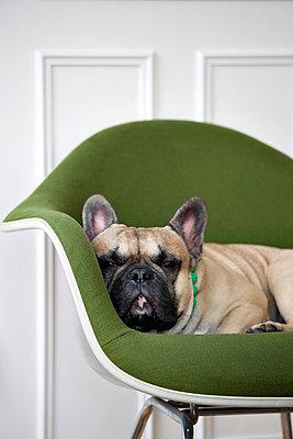 Dog taking a nap - p4320479 by mia takahara