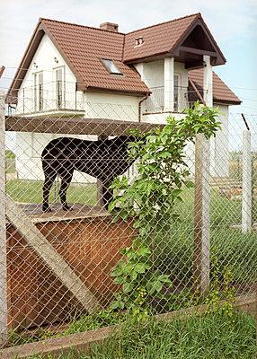 Hund im Zwinger - p8340024 von Jakob Börner