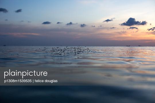 p1308m1539535 by felice douglas