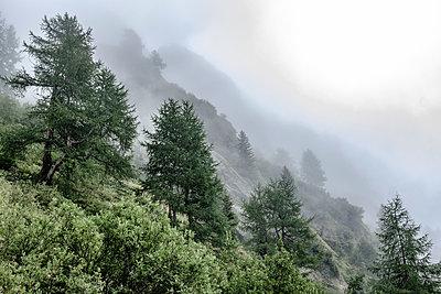 Gebirgswald in Kals, Osttirol - p1463m2227428 von Wolfgang Simlinger