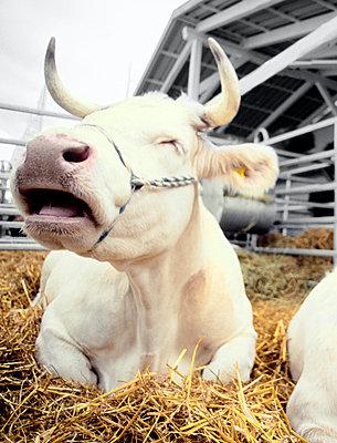 Dairy Farm - p2530258 by Oscar
