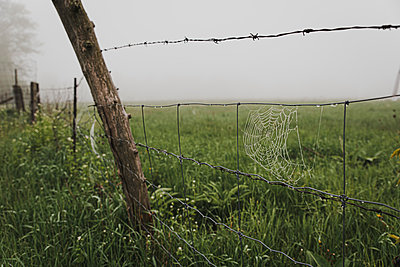 Close up of dew covered spider web on a wire fence in the fog. - p1166m2113077 by Cavan Images