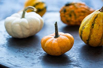 Ornamental pumpkins - p300m2042162 von JLPfeifer