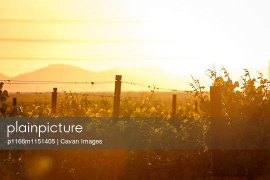 p1166m1151405 von Cavan Images