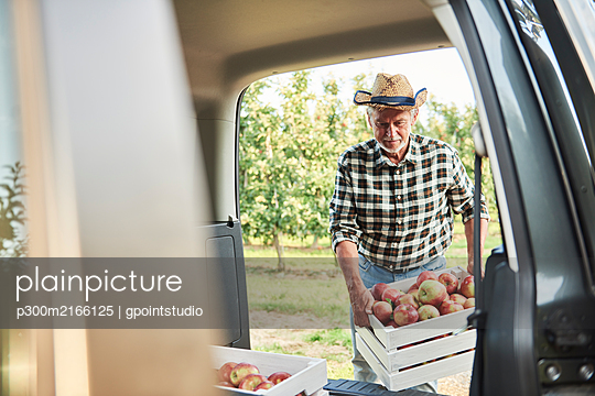Fruit grower loading car with apple crates - p300m2166125 by gpointstudio
