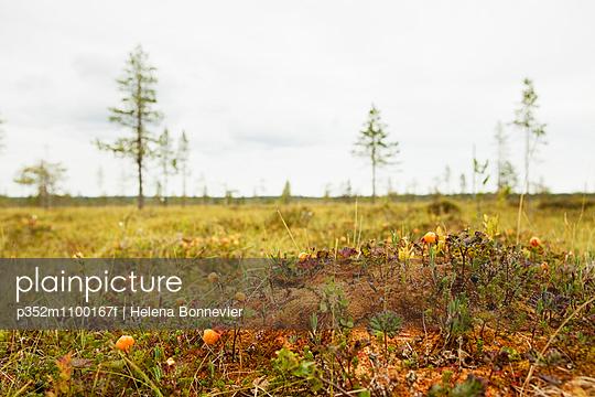 p352m1100167f von Helena Bonnevier