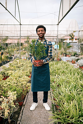 Smiling young male worker holding potted plant in nursery - p300m2240632 by LUPE RODRIGUEZ