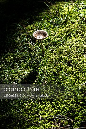 Mushroom - p280m2291610 by victor s. brigola