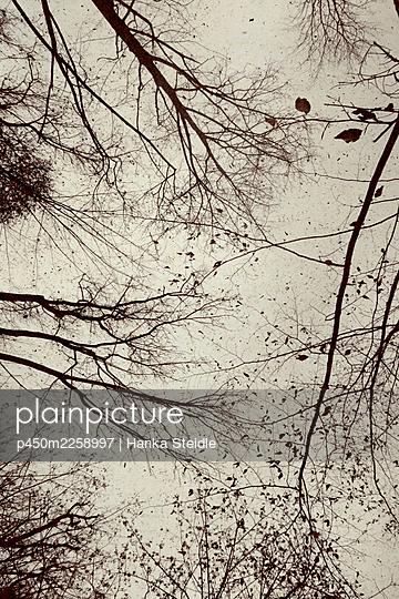 Treetops - p450m2258997 by Hanka Steidle