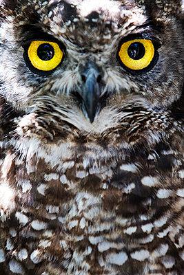 Owl - p226m1138334 by Sven Görlich
