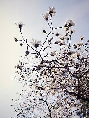 Spring - p715m755889 by Marina Biederbick