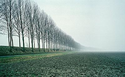 Trees in fog - p1132m1016952 by Mischa Keijser