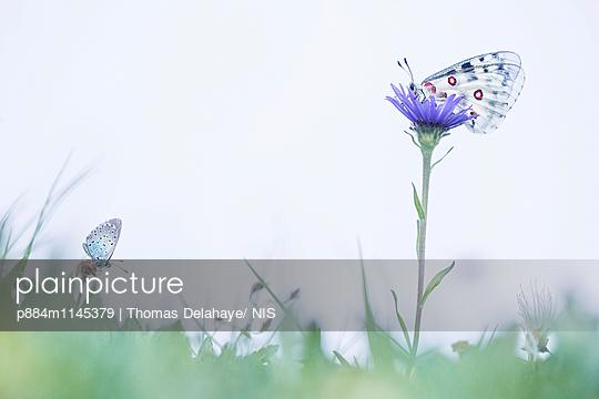 p884m1145379 von Thomas Delahaye/ NIS