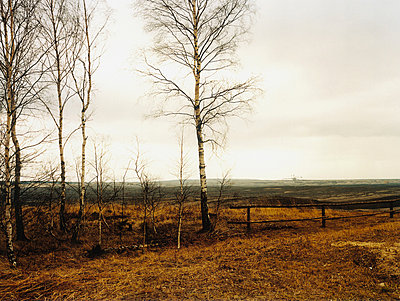 Birch Trees at Nochten surface mining - p2687026 by G. Mieth