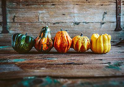 Row of five Ornamental pumpkins on wood - p300m1580719 von Giorgio Fochesato