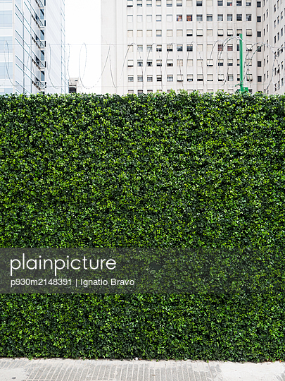 Artificial hedge in front of high rise building - p930m2148391 by Ignatio Bravo