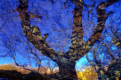 Abstract image of a tree against blue skies - p1072m828893 by Chinch Gryniewicz