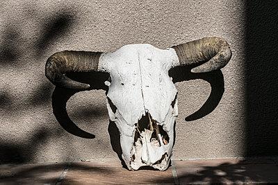 Tierschädel - p1082m2071321 von Daniel Allan