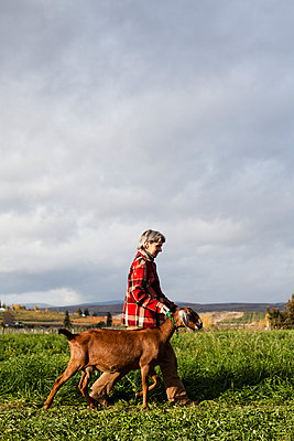 TIETON, WASHINGTON, USA. A woman walks a goat to the milking station in a field at sunrise. - p1424m1501656 by Michael Hanson