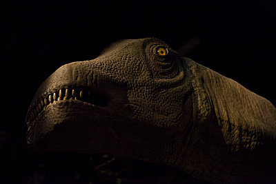 Dinosaur - p756m787350 by Bénédicte Lassalle