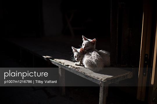 Zwei Kätzchen im Zwielicht - p1007m1216786 von Tilby Vattard