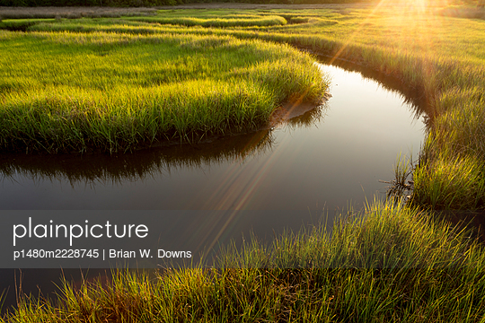 Marshland in the sunshine, North Carolina - p1480m2228745 by Brian W. Downs