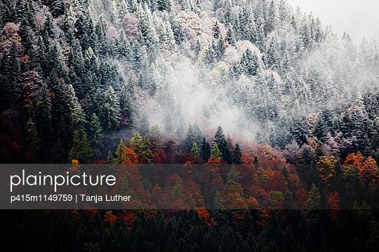 Herbstwald - p415m1149759 von Tanja Luther