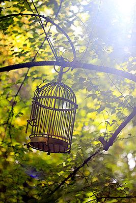 Freiheit - p450m893629 von Hanka Steidle