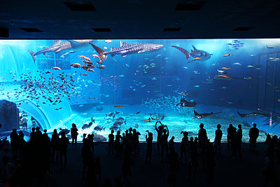 Okinawa Churaumi Aquarium - p664m1025723 by Yom Lam