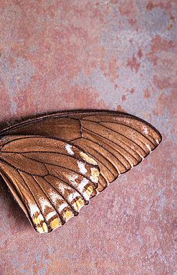 Butterfly wings - p971m1461281 by Reilika Landen