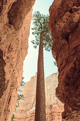 Bryce Canyon - p1564m2149926 von wpsteinheisser