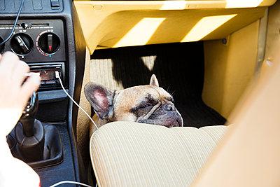Hund schläft auf Autofahrt - p432m1480777 von mia takahara