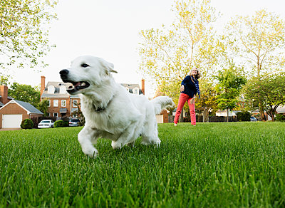 Caucasian woman playing with dog in park - p555m1415410 by Roberto Westbrook