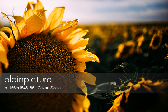 p1166m1545188 von Cavan Social