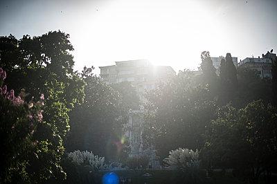 Sun in a garden - p1007m1134823 by Tilby Vattard