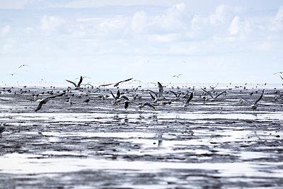 Northern Sea - p739m710491 by Baertels