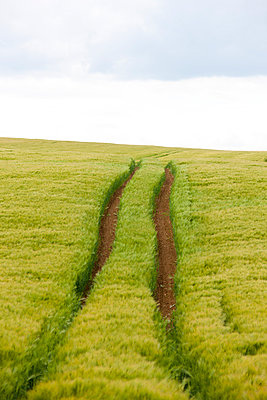 Tractor tracks - p248m912070 by BY
