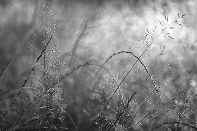 Meadow with wild flowers - p308m2124866 by Ellen Bornkessel