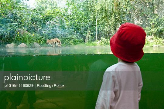 Kind schaut auf Tiger beim Trinken, Blick durch eine Glasscheibe, Leipzig Zoo, Leipzig, Sachsen, Deutschland - p1316m1160529 von Roetting+Pollex