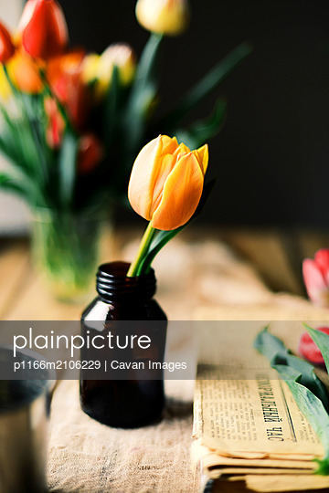 Yellow tulip with green leaves in a vase. Modern floral simple design - p1166m2106229 by Cavan Images