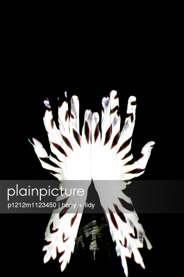 Schwarz-Weiß Projektion auf Hände - p1212m1123450 von harry + lidy
