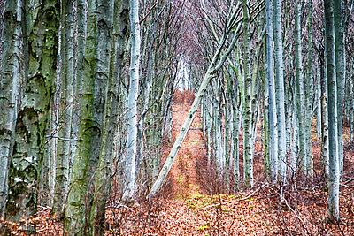 Wald - p1205m2054341 von Toni Anzenberger